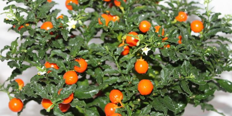 Декоративный цветок с оранжевыми