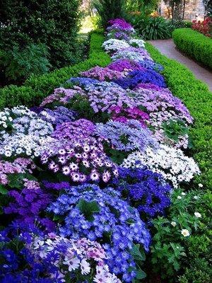 Прямые цветочные клумбы