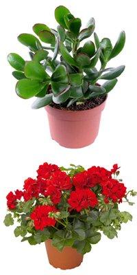 Растения в дом