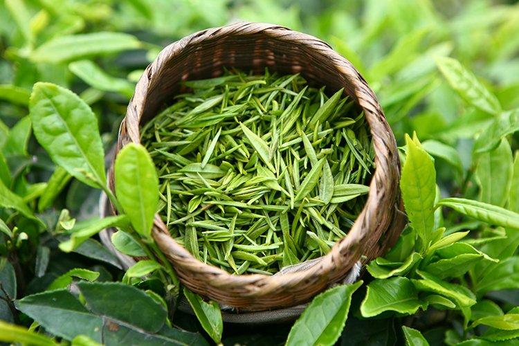 Зеленый чай для шевелюры