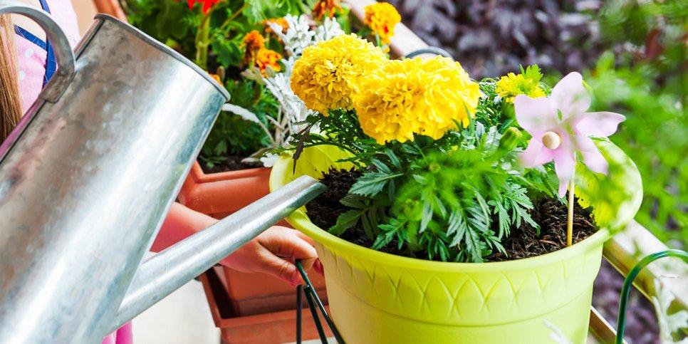 Удобрять комнатные цветы банановой кожурой