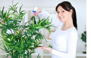 Опрыскивать цветы