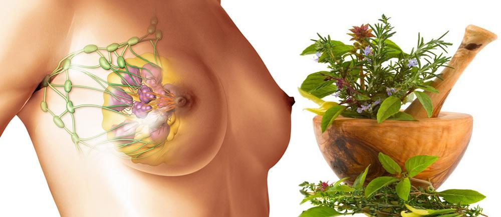 Травы при мастопатии